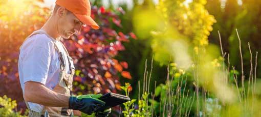 Fernlehrgang: Gartengestaltung
